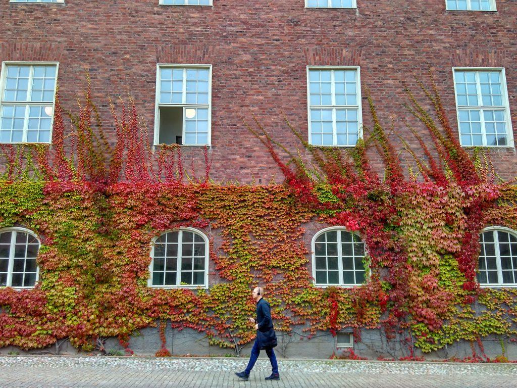 Tanaman merambat di gedung KTH di depan Borggården. Foto oleh Satu Cahaya Langit