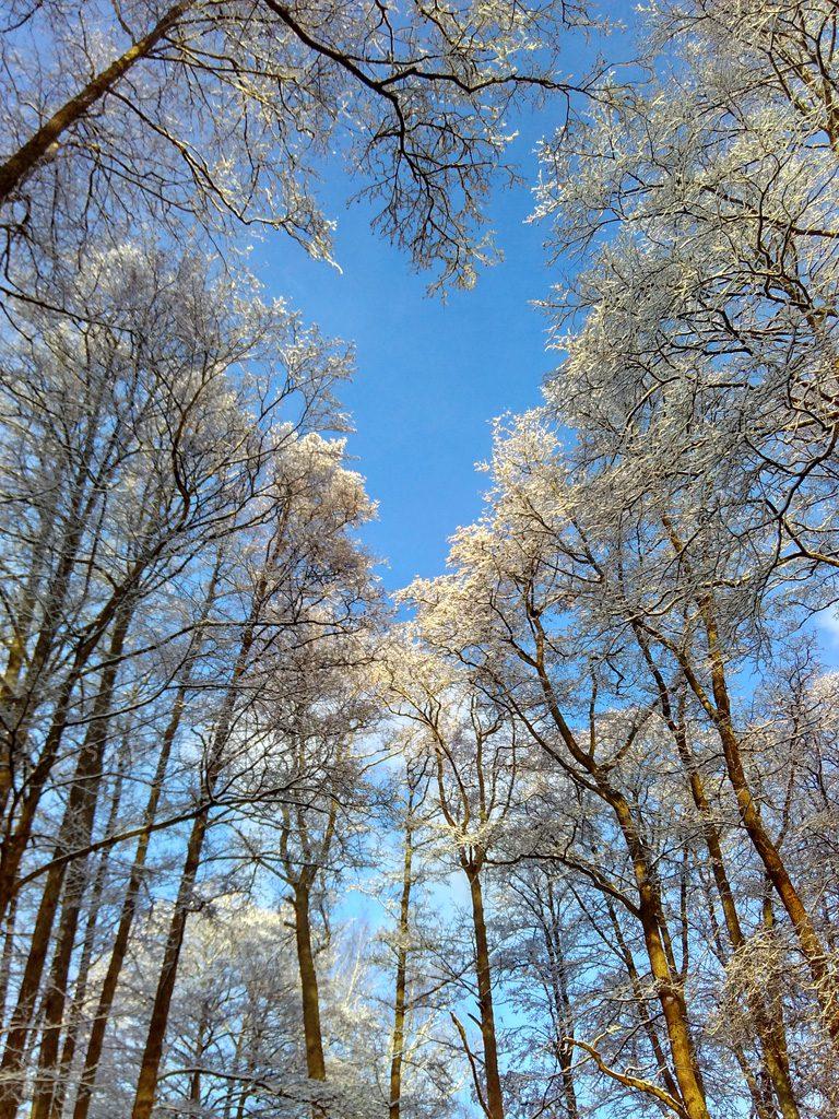 Langit biru dan pohon putih