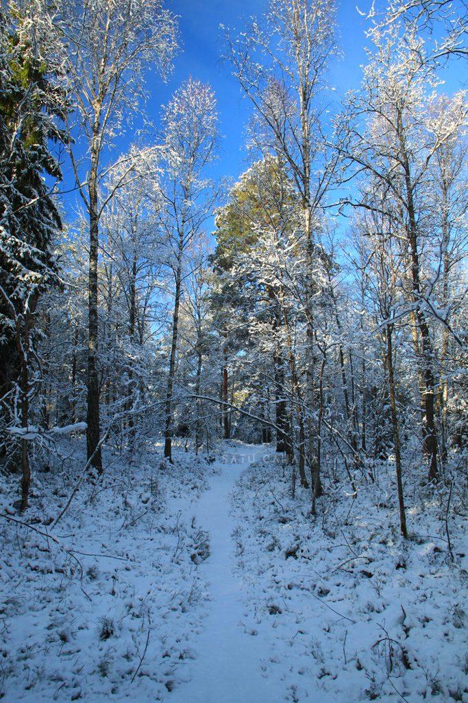 Jalan setapak di hutan