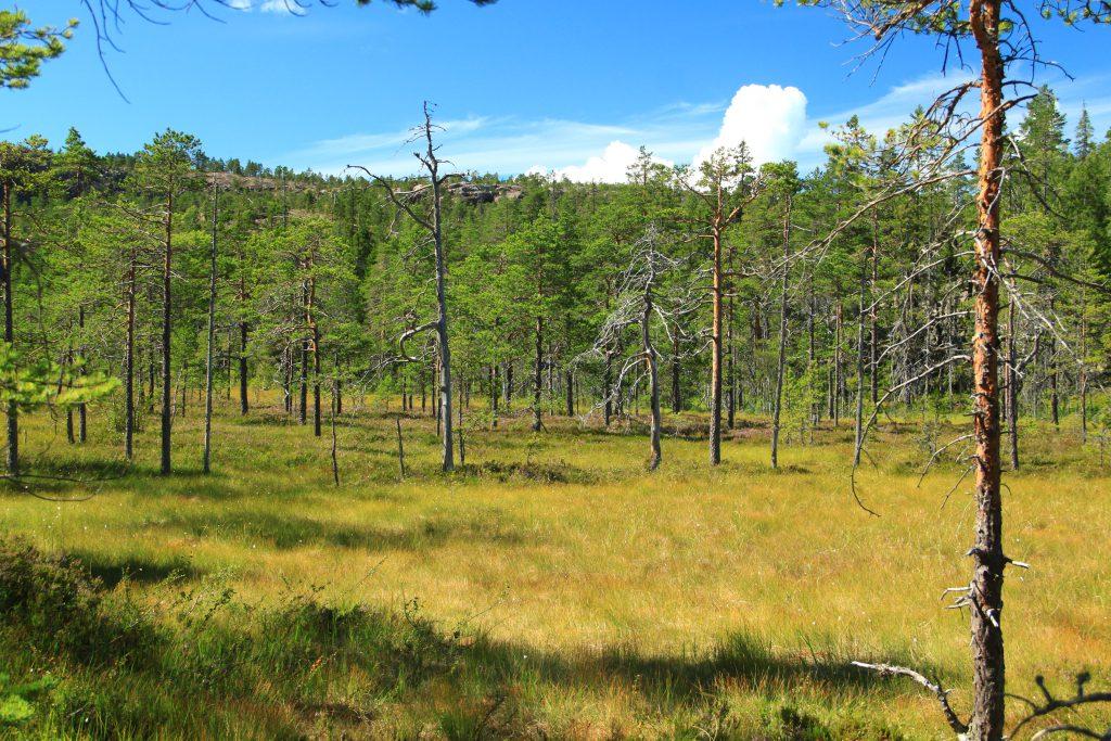 Pemandangan di taman nasional