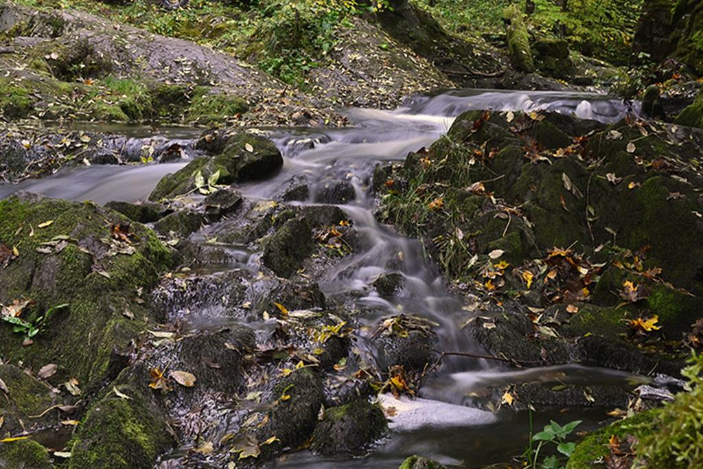 sungai musim gugur