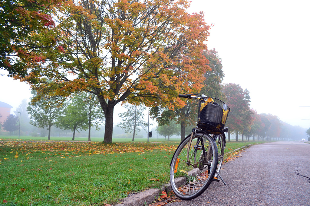 musim gugur di swedia
