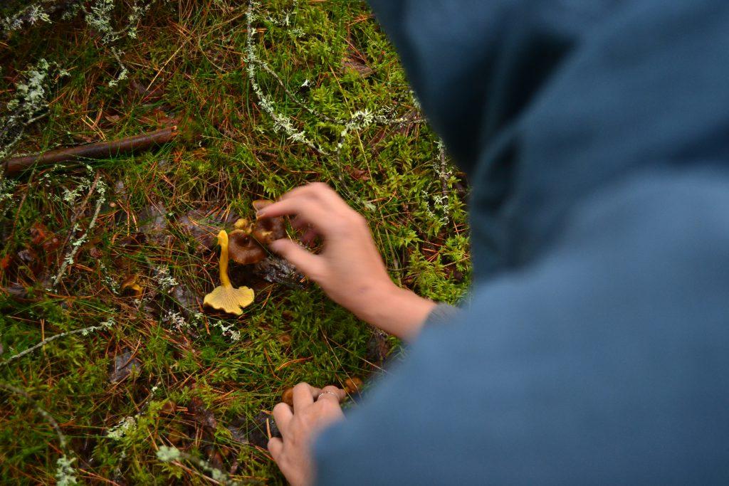Cari jamur di hutan (Sumber: Sania)